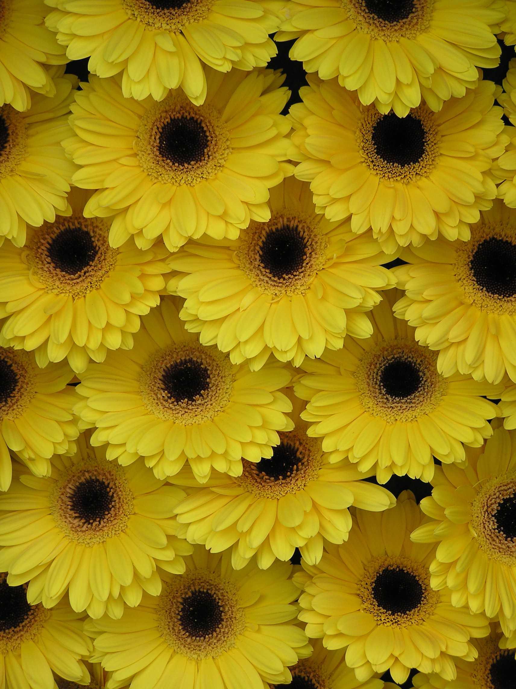Wedding flower wall ideas - Flower PressFlower Press