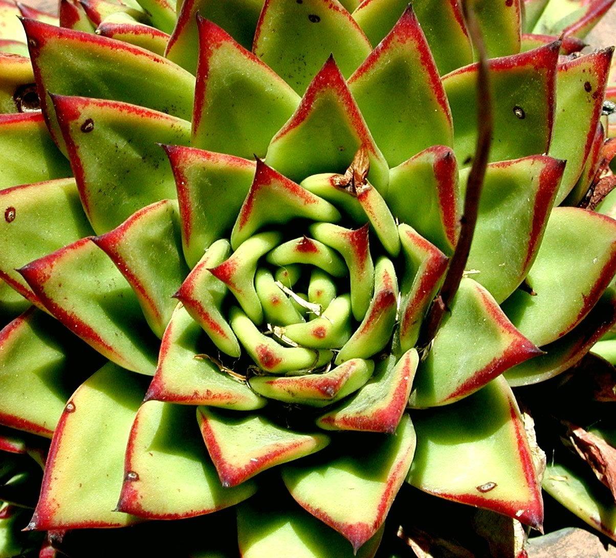Succulent Types: Beautiful Succulent Varieties