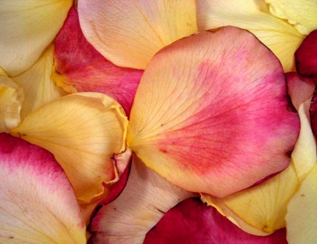 Rose petals for romance