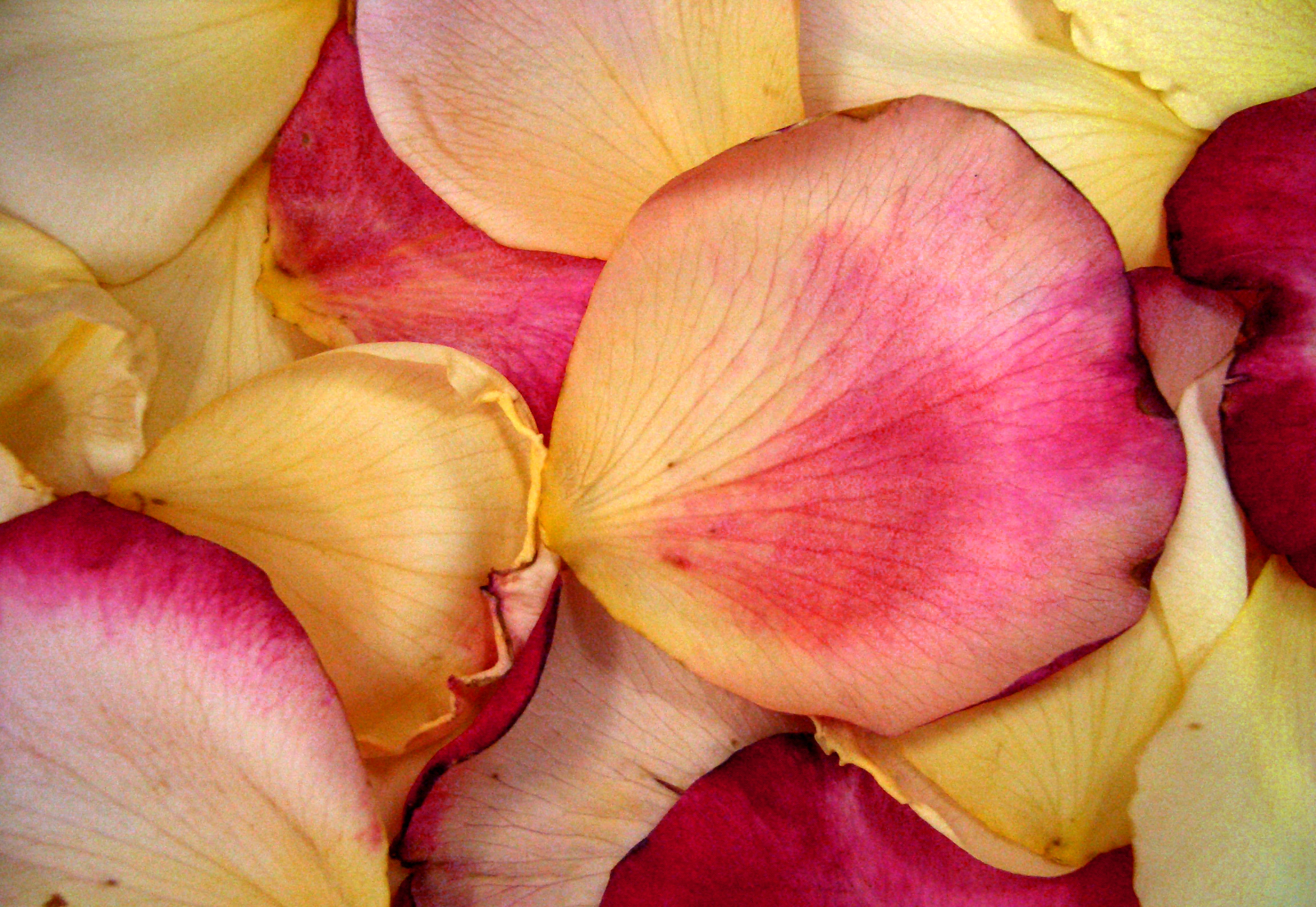 Use rose petals for romance