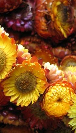 Repurpose flowers