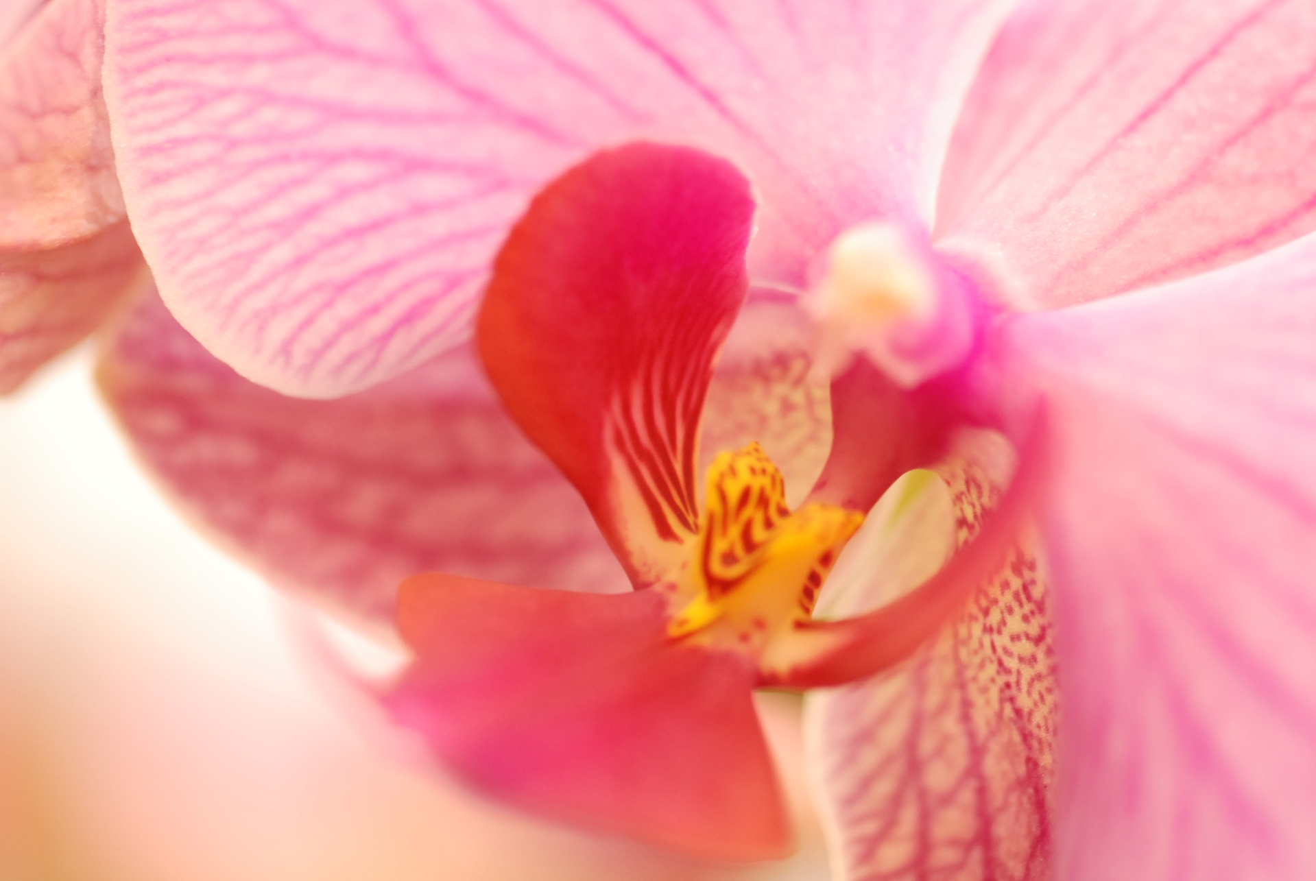 Tips to help your orchids rebloom