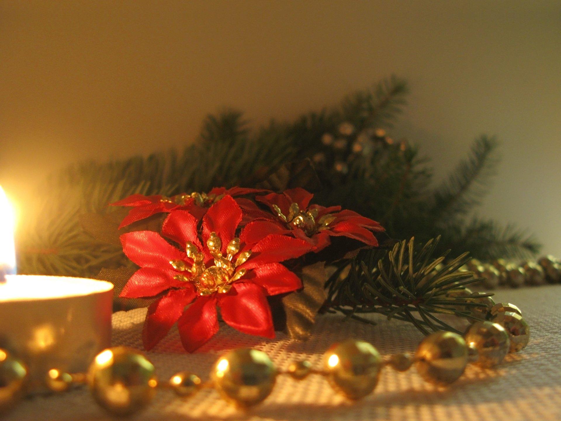 Floral elegance for the festive season
