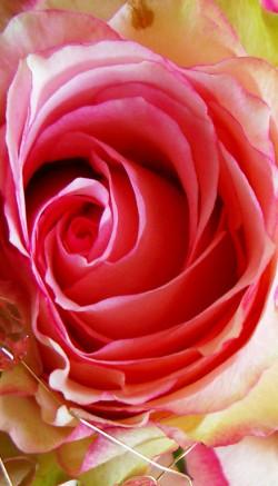 Flowers for the elderly