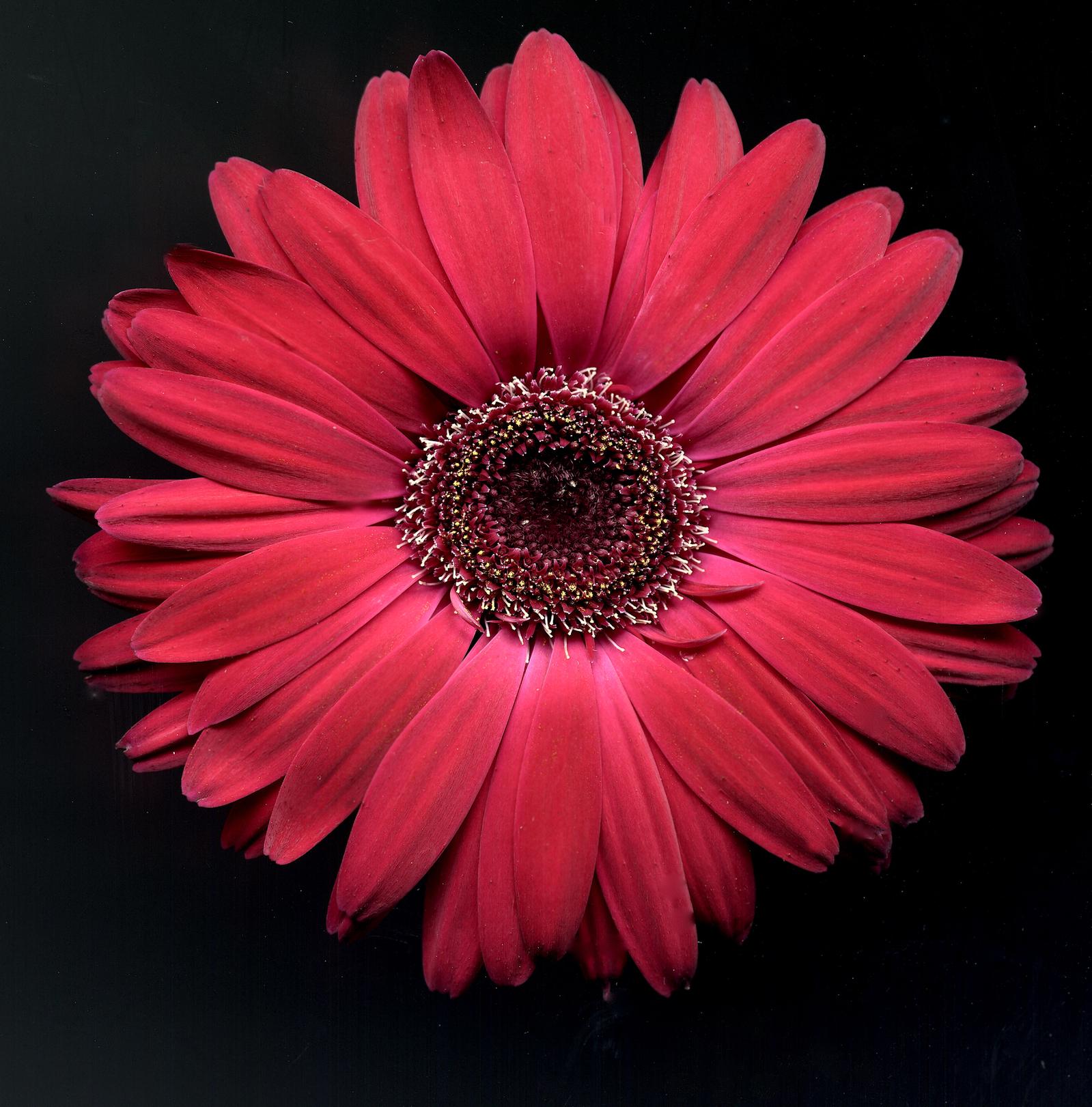 Fun floral napkin rings