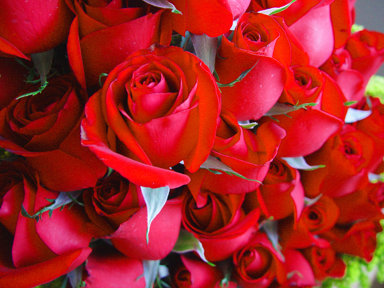 Valentine's Day and red roses