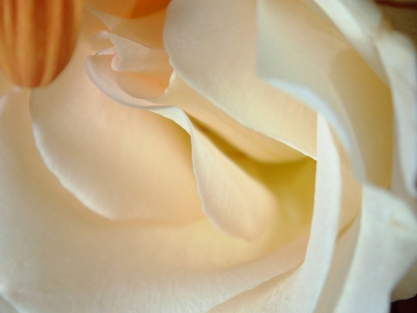 Make your own silk rose topiary