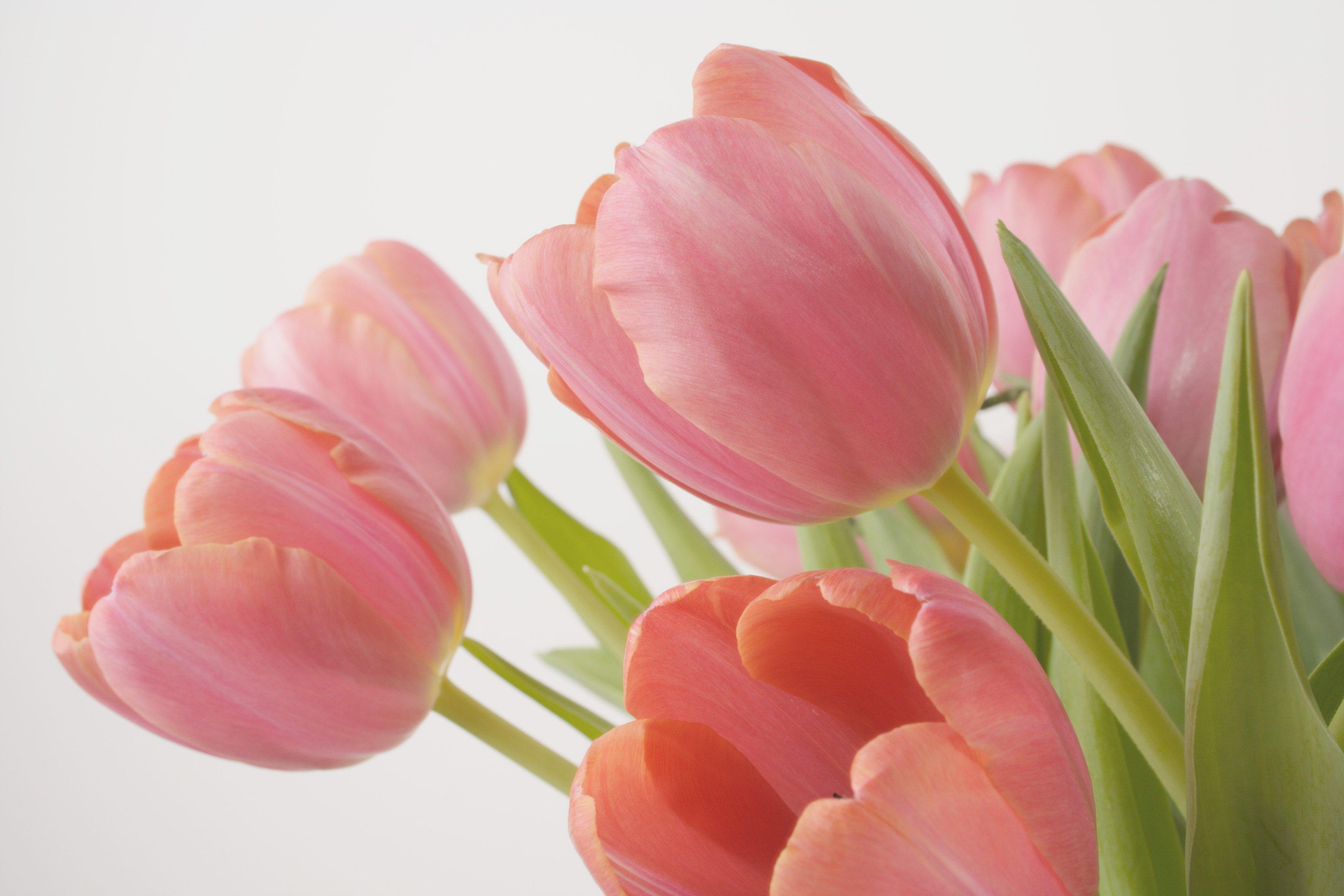 Wonderful varieties of tulips