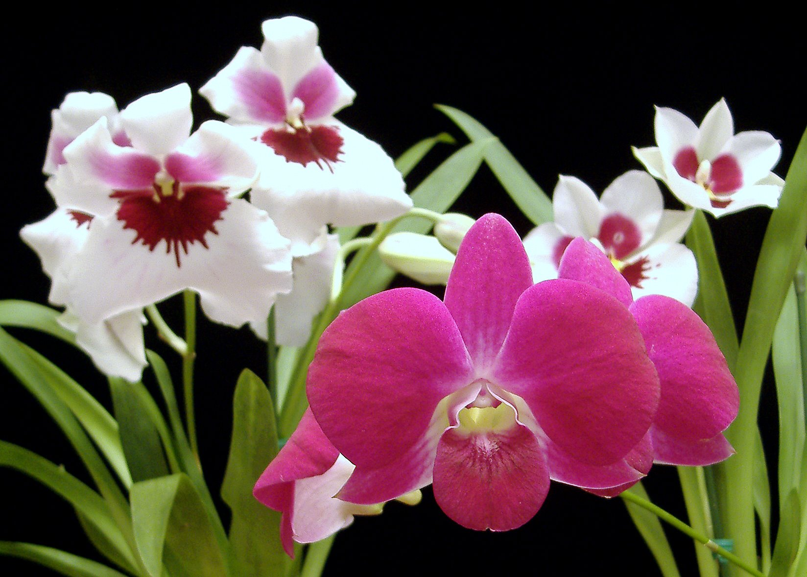 Elegant Mother's Day blooms