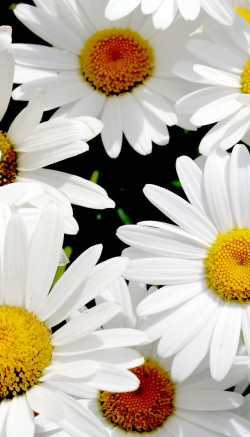 Types of white flowers