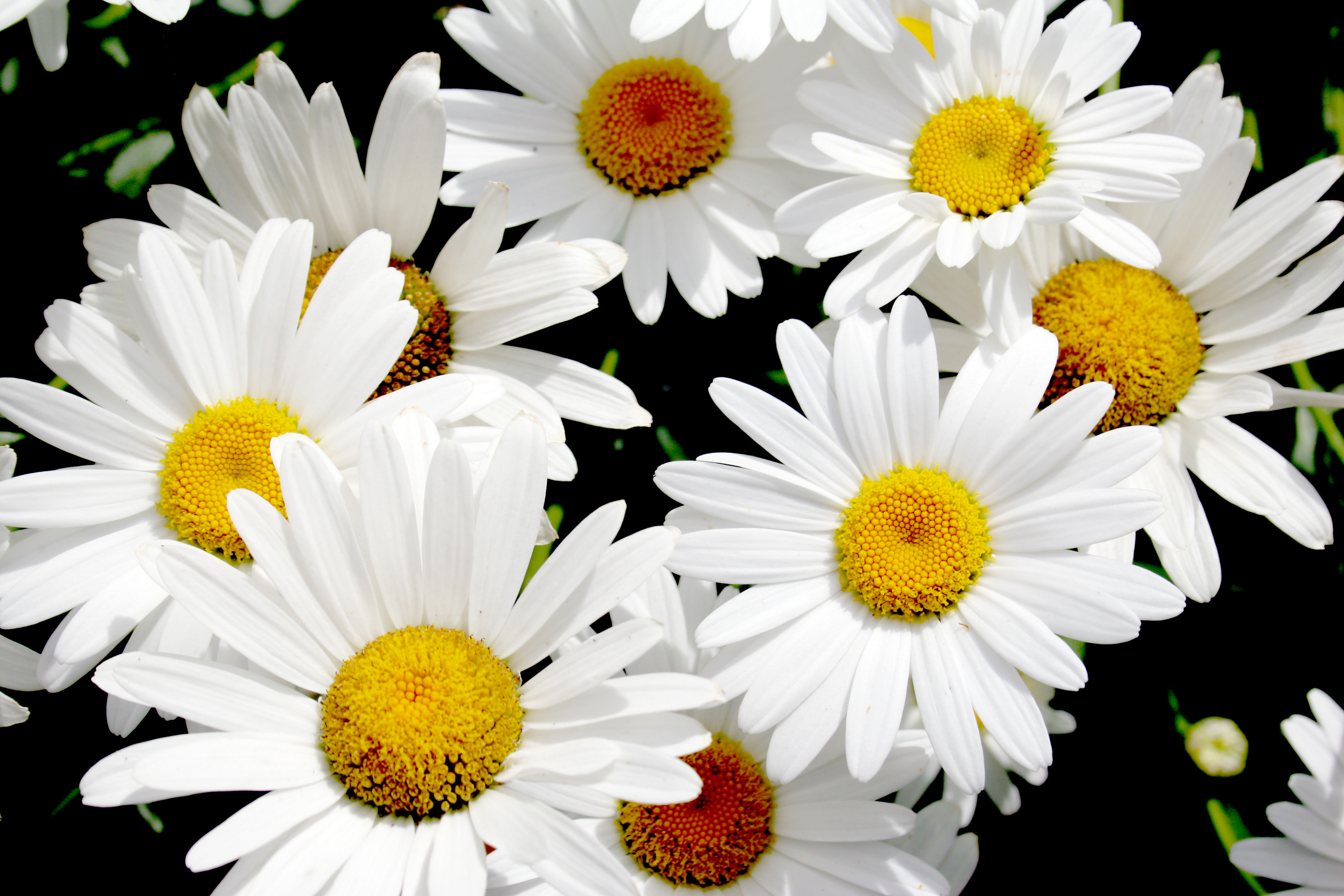 Popular white blooms flower pressflower press types of white flowers mightylinksfo