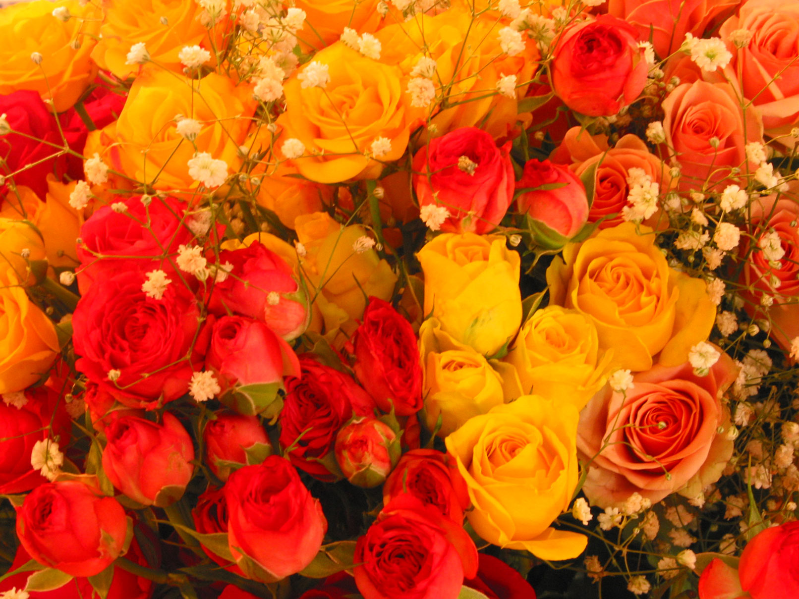 Feng Shui and flower colours