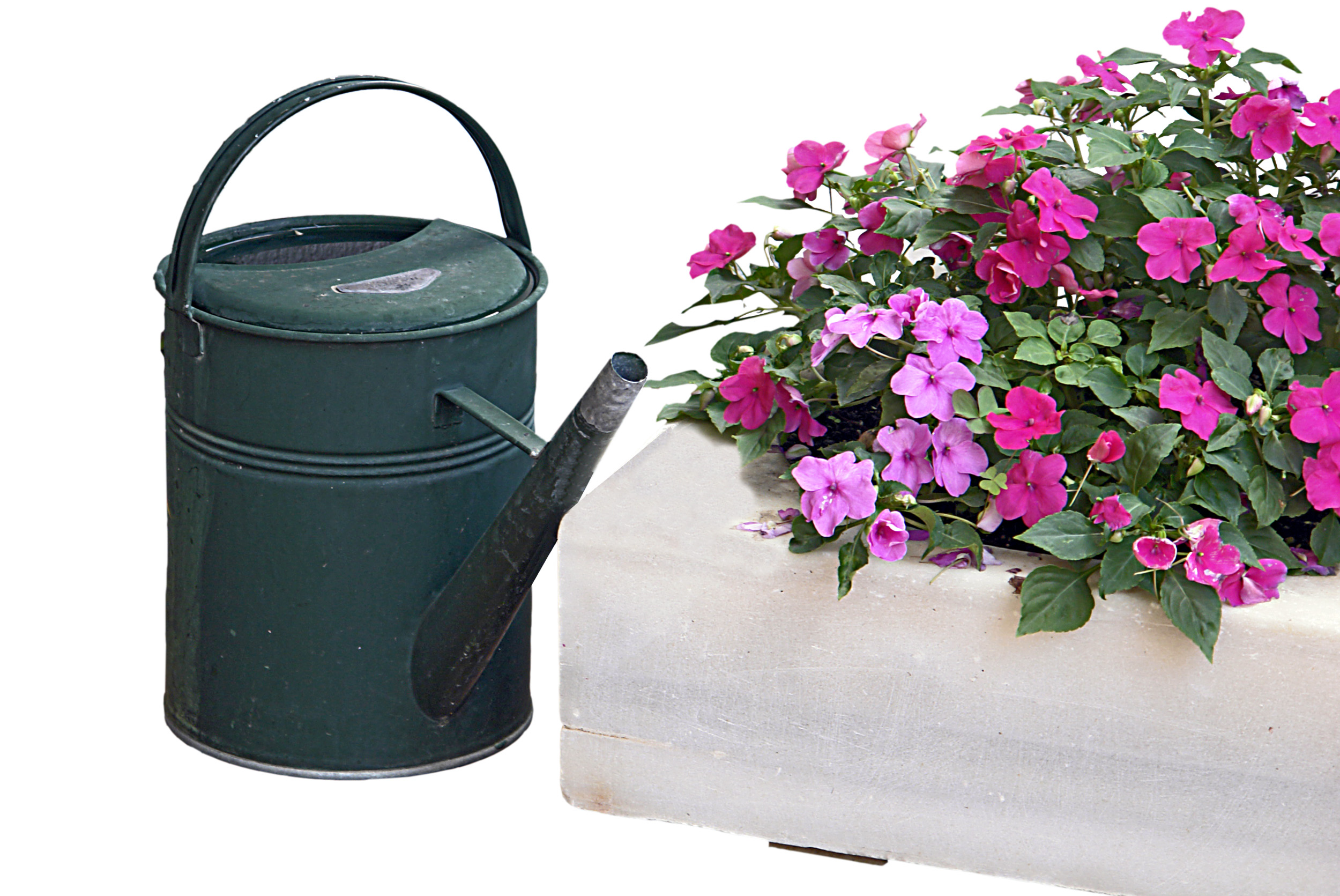 Which Is Best Annual Or Perennial Flowers Flower Pressflower Press
