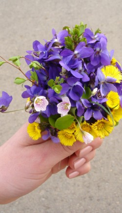 Wildflowers for spring weddings