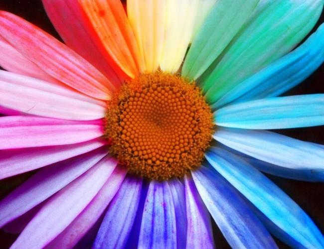 Creative flower colours