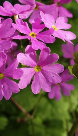 Spring flowers for your garden and home