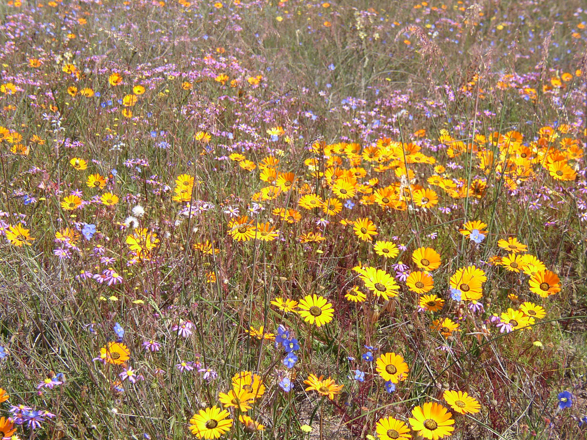 Making your own wildflower bouquet