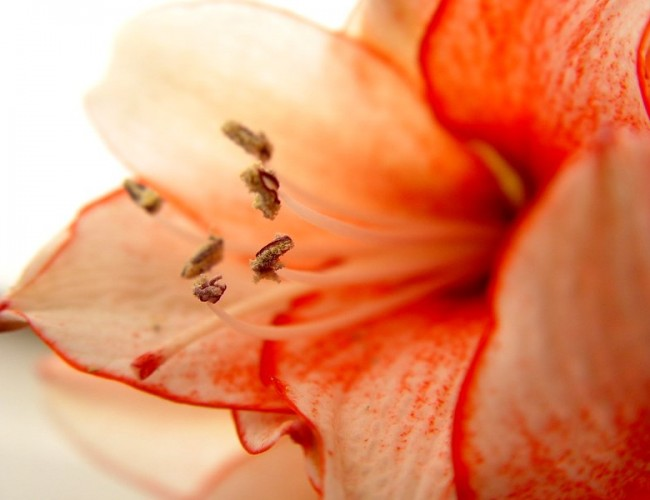 how to make an amaryllis flower arrangement