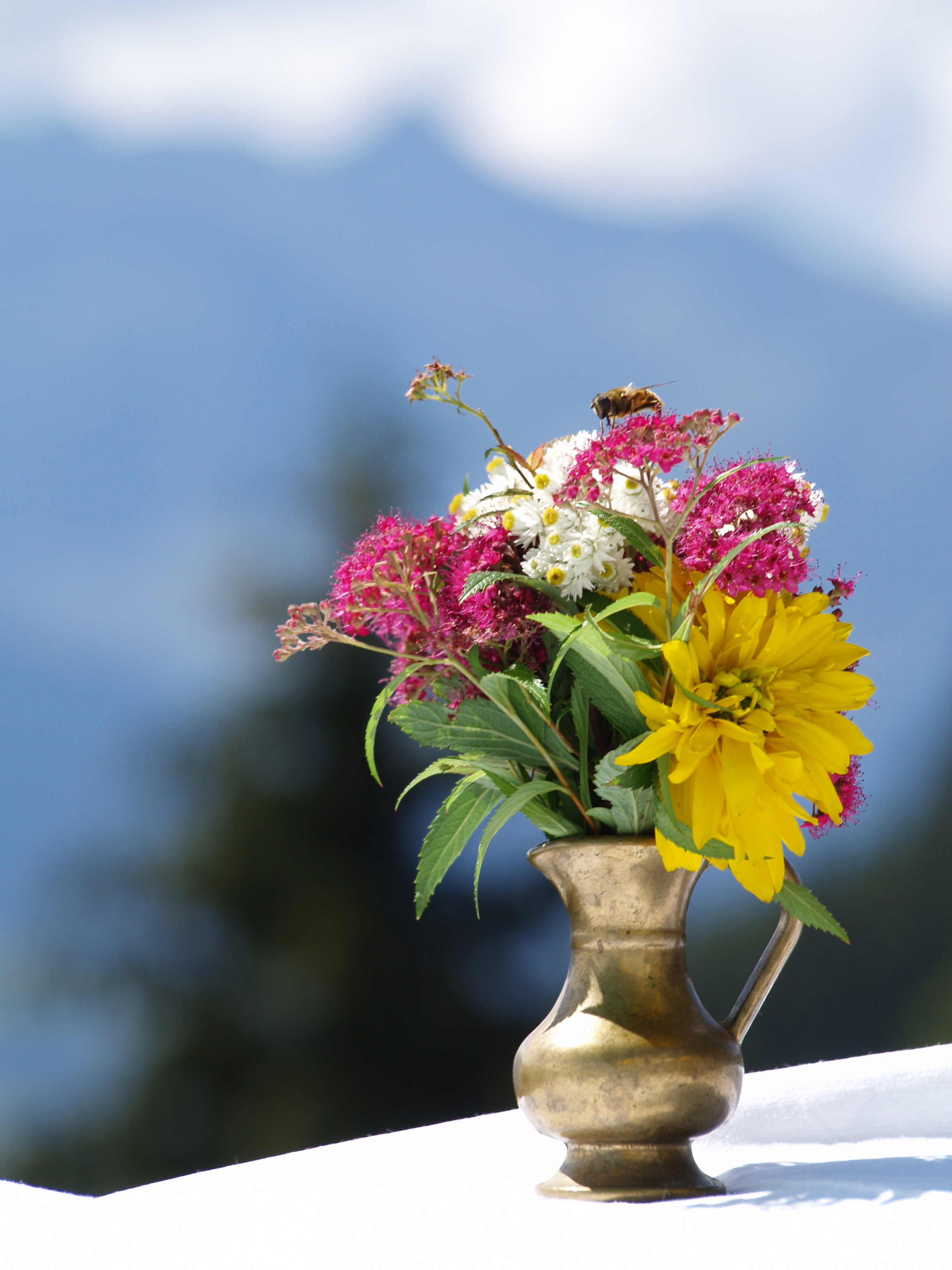 Plant and flower health benefits