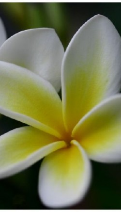 Hawaiian luau flowers