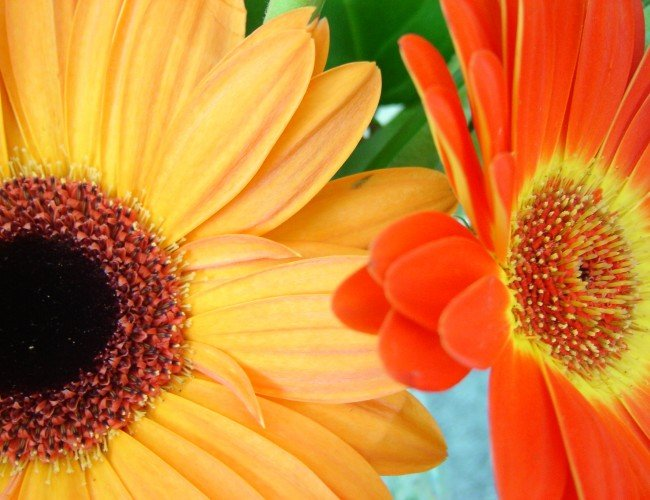 Summer flowers for your bedroom