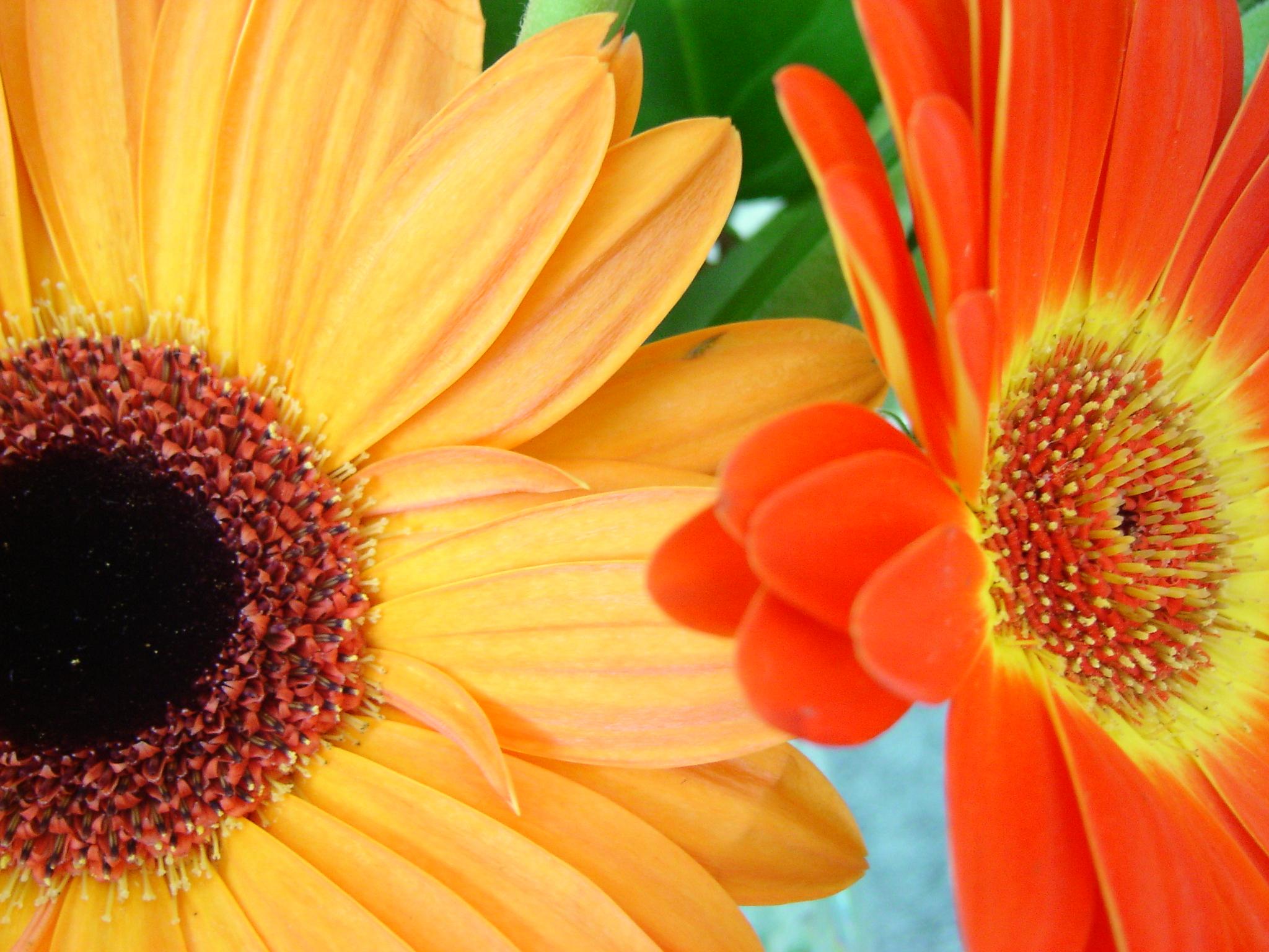 Bedroom blooms for summer