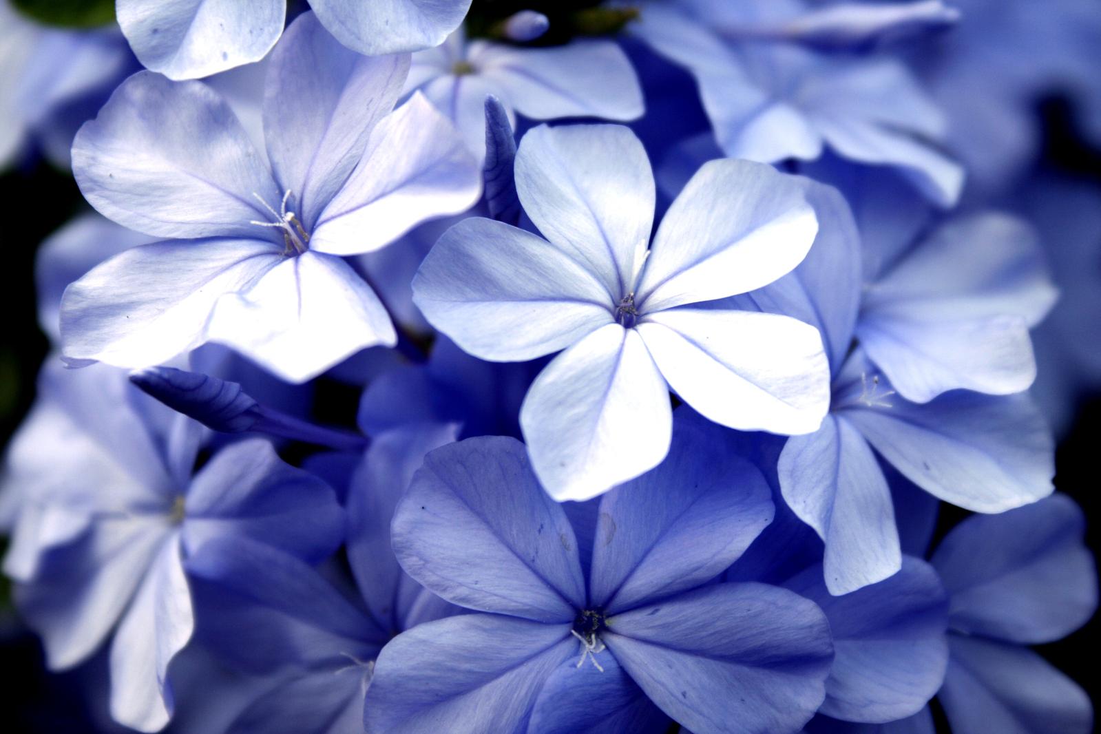 Make a floral display for him