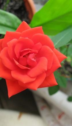 Hybrid flowers benefits