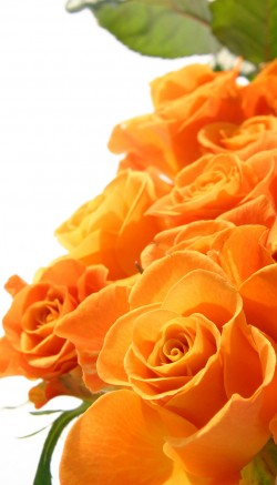 Keep flowers fresh overnight
