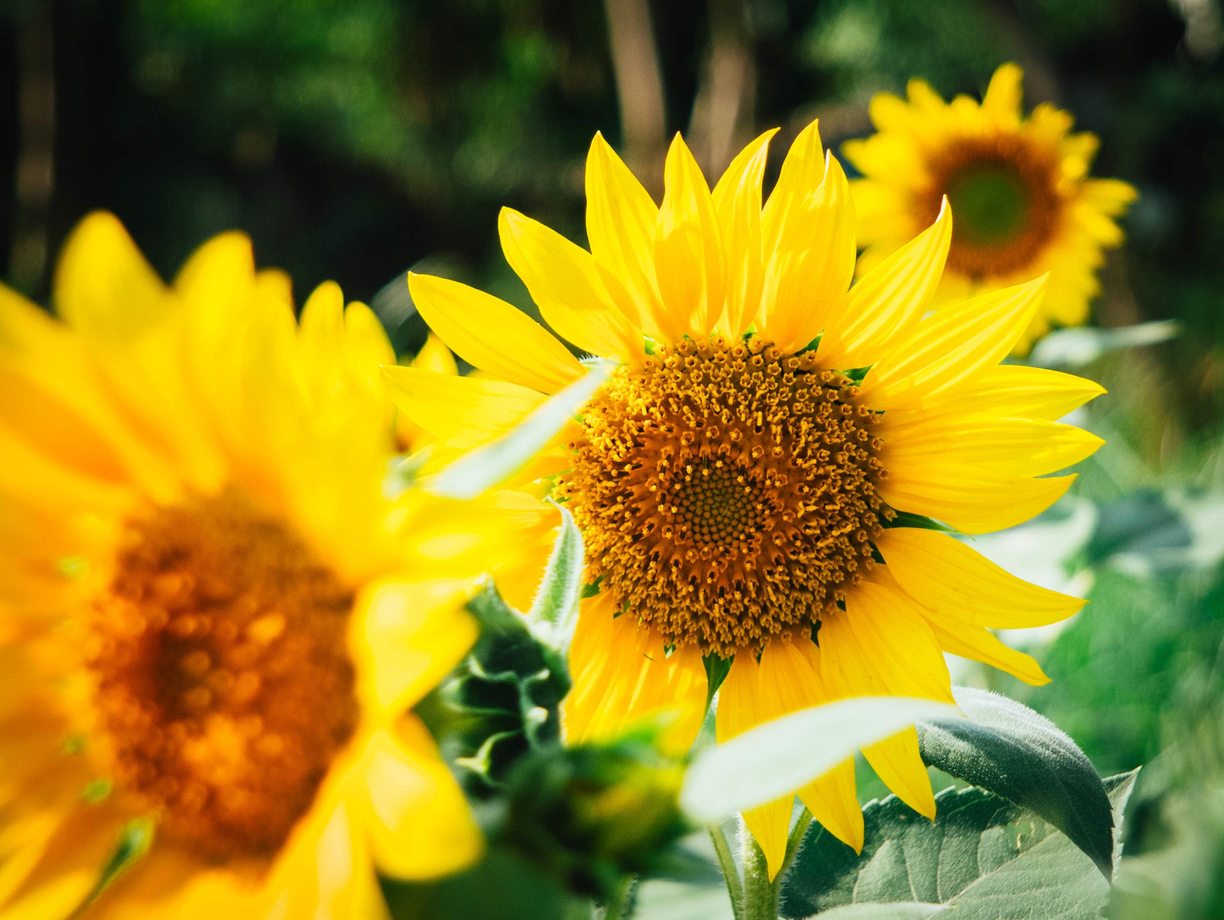 Beautiful Yellow Flowers Flower Press