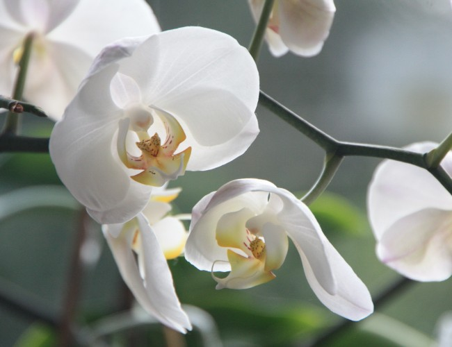 Help orchids re-bloom