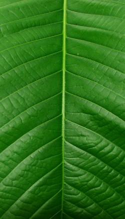 Types of foliage