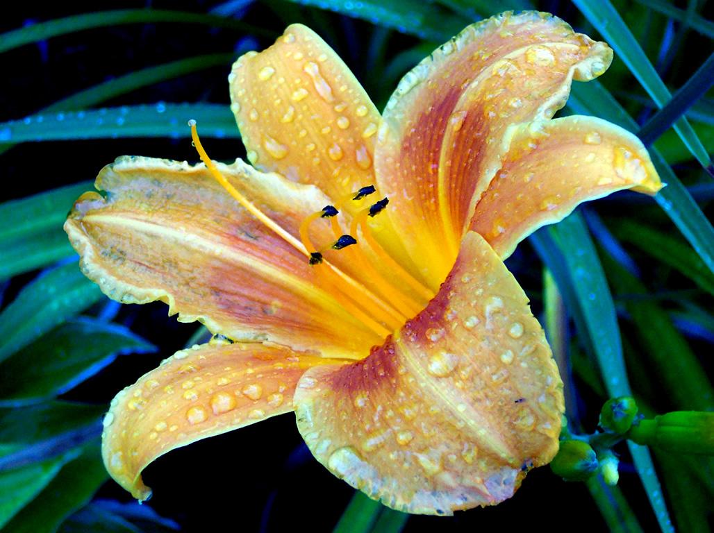 Lovely varieties of lilies flower press types of lilies izmirmasajfo