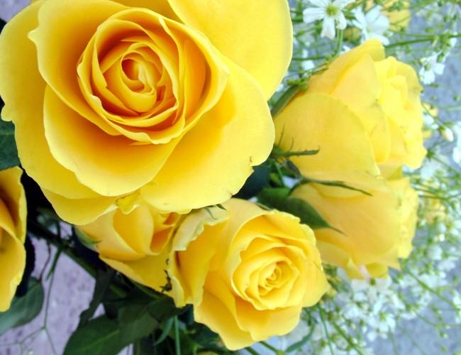 Flowers and joy
