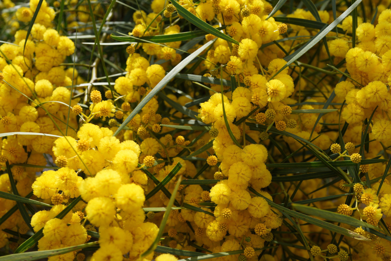 Autumn foliage for flower arrangements