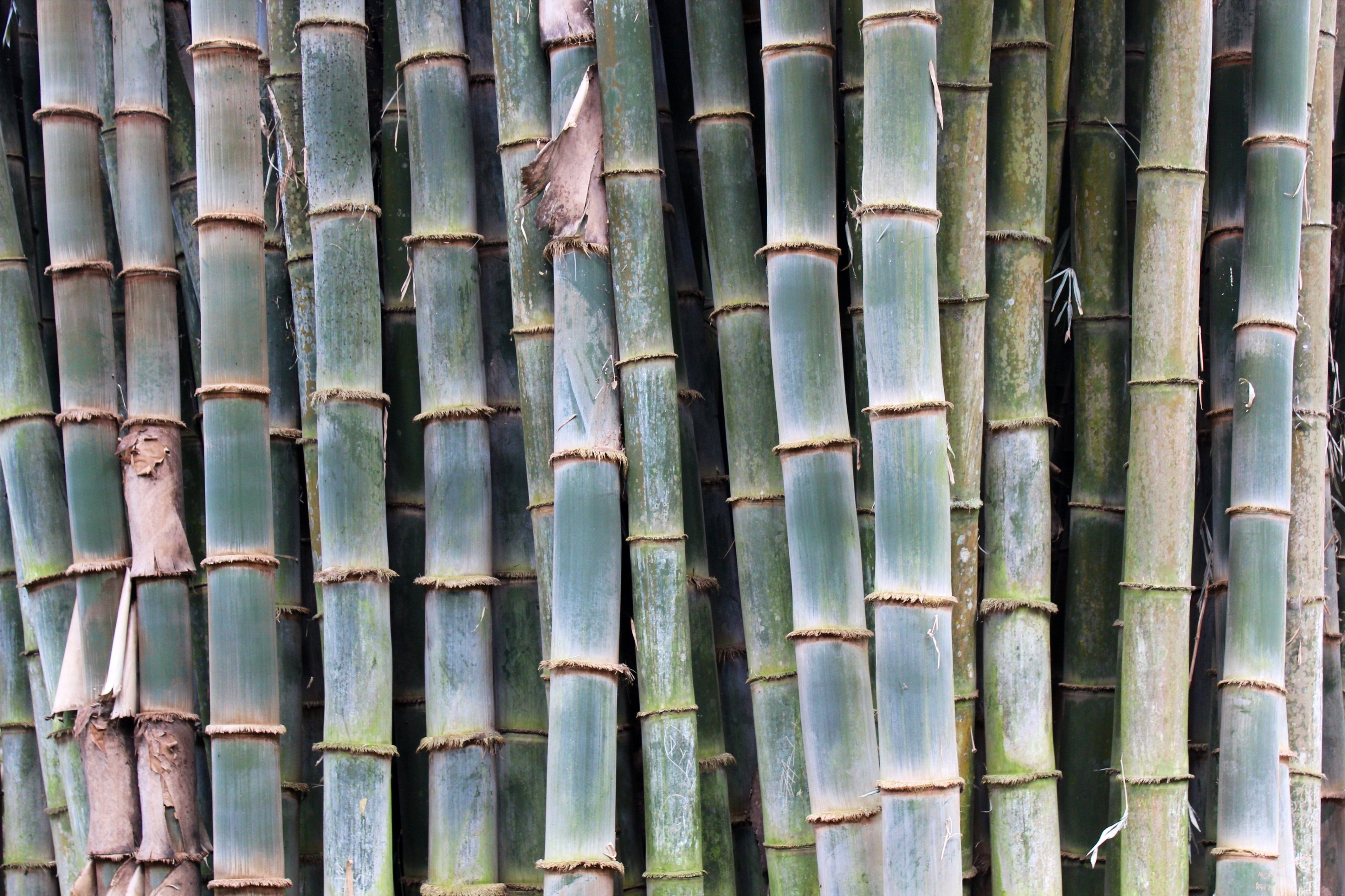 Bamboo – the rising star in flower arrangements