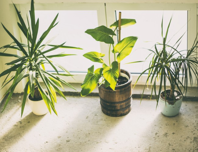 House plant benefits