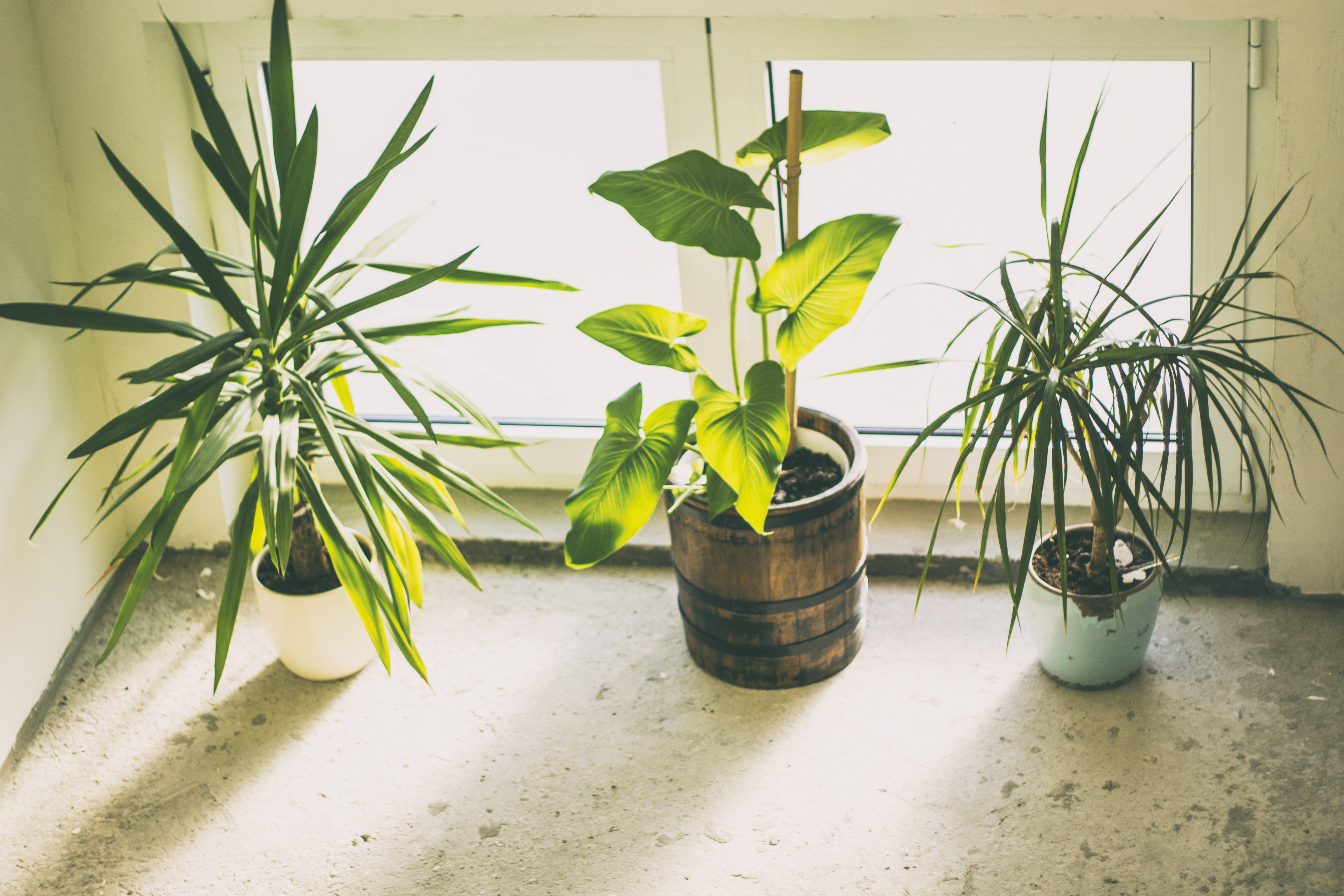 How plants can benefit your health