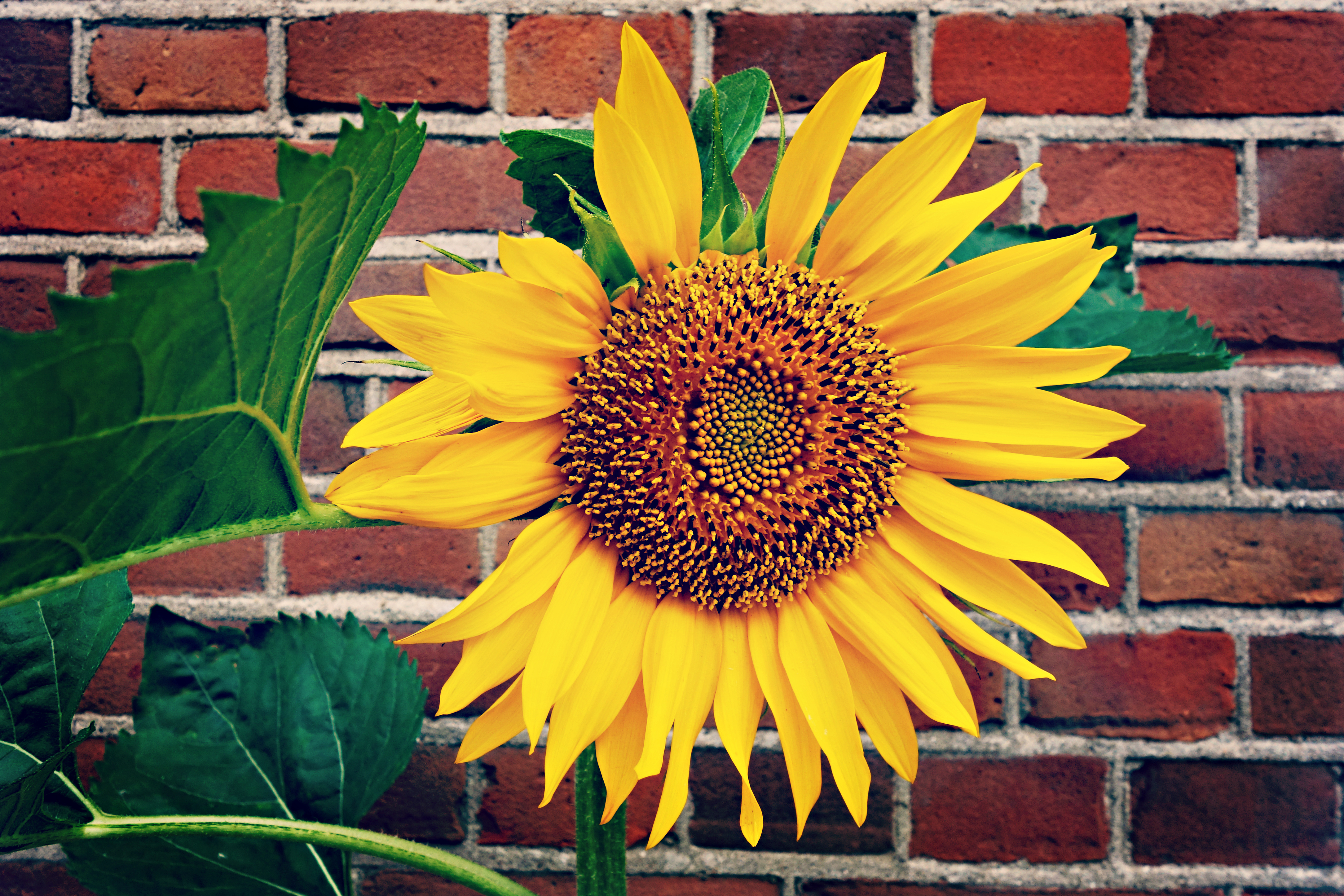 Make a sunflower candle holder