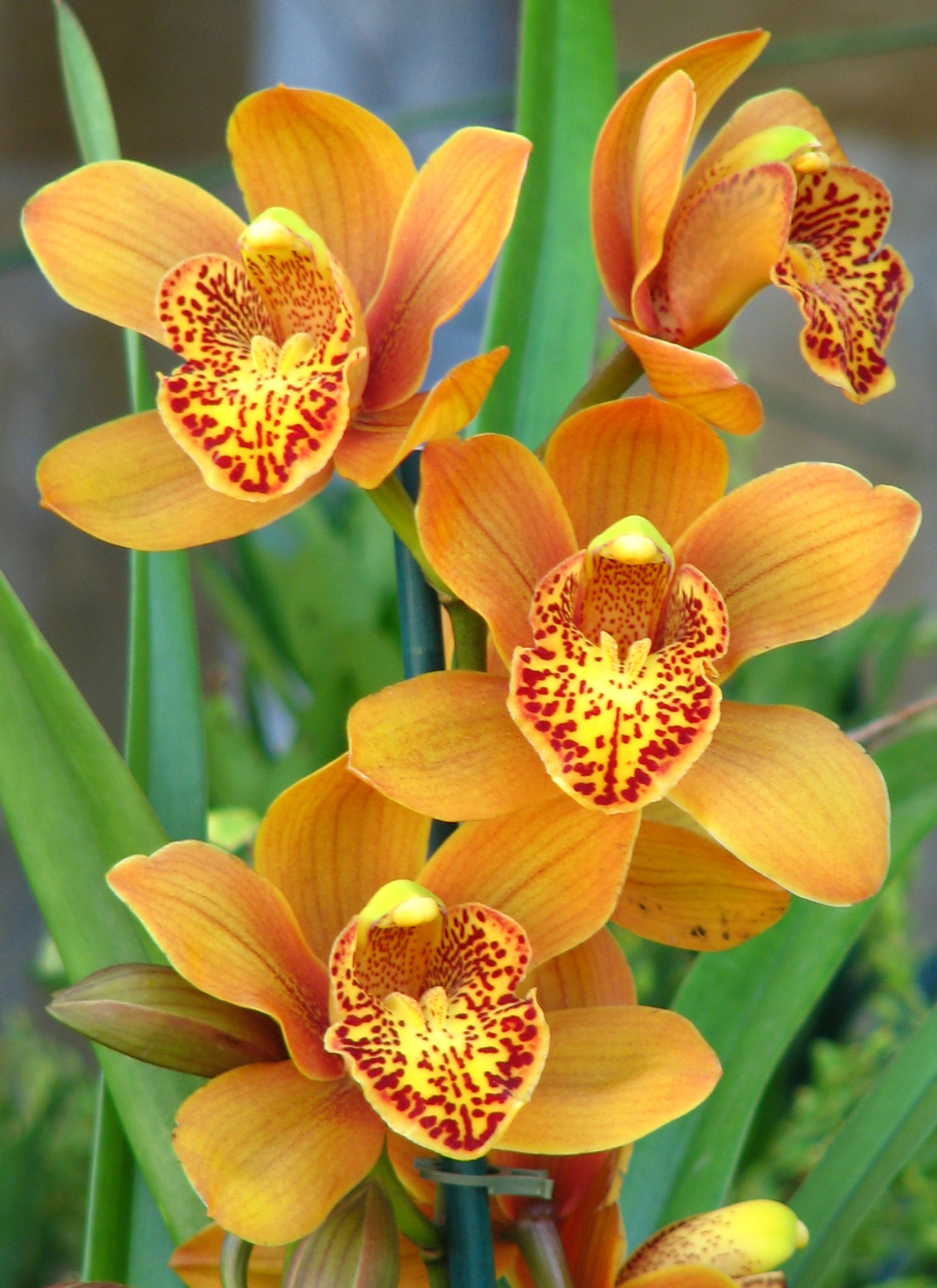 Keep your orchids happy with these tips