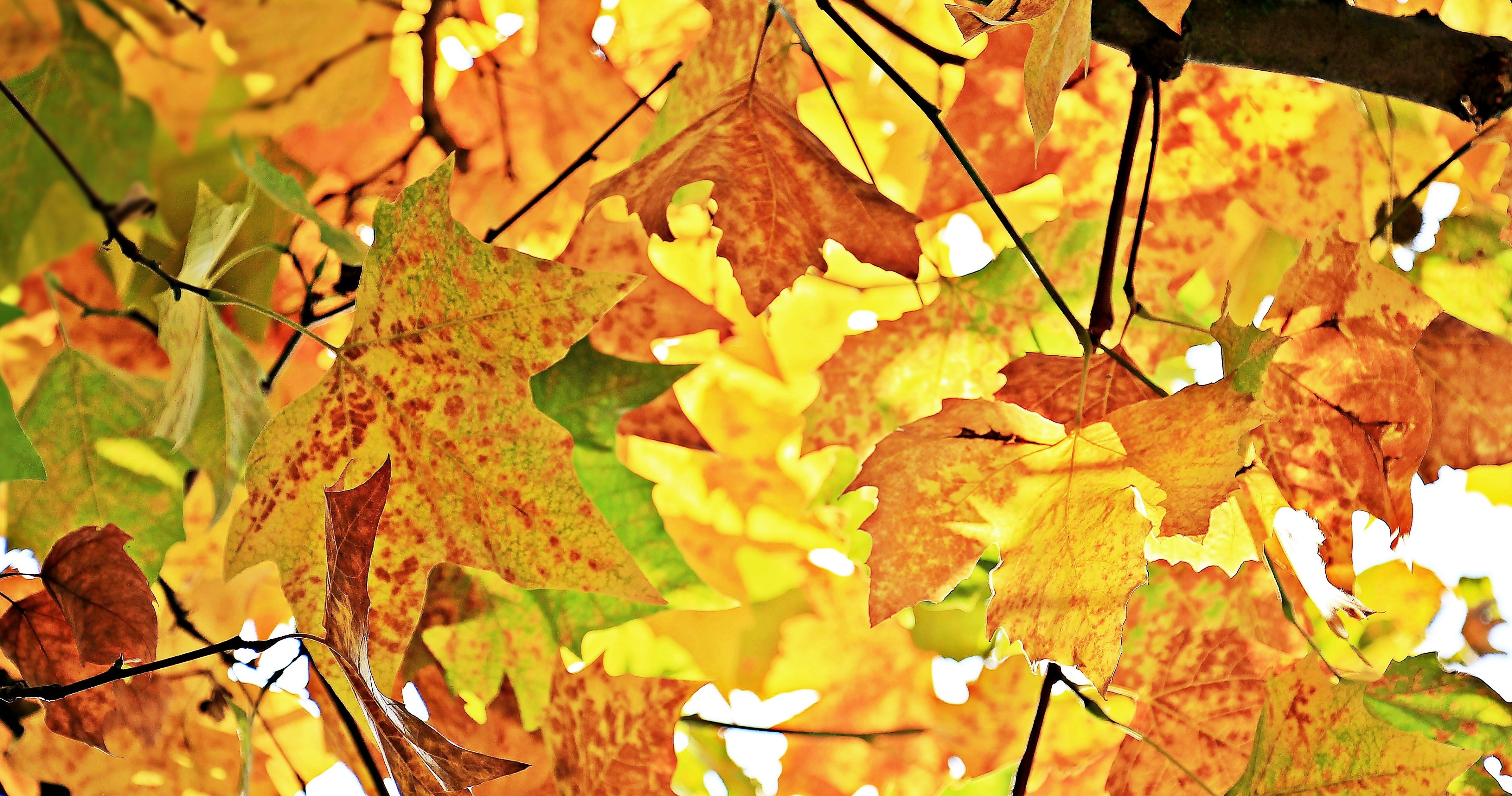 Autumn leaf vase