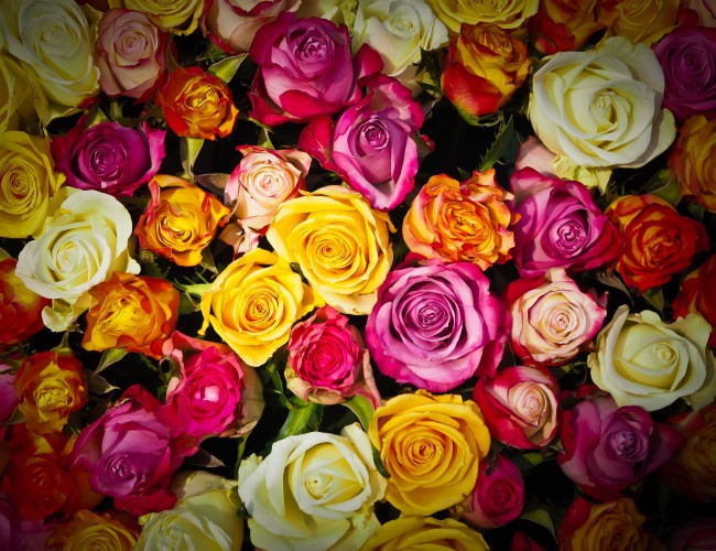 Long and short stemmed roses