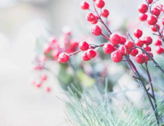 Using berries in flower arrangements